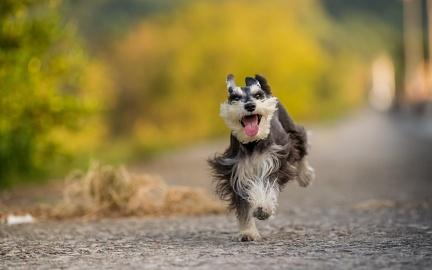 Little dog - HD Wallpaper (3)