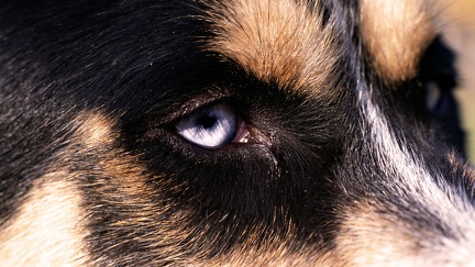 Dog look - HD desktop wallpapers