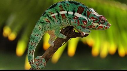 Reptile - HD Wallpaper (2)