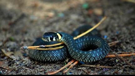 Snake Wallpaper (1)