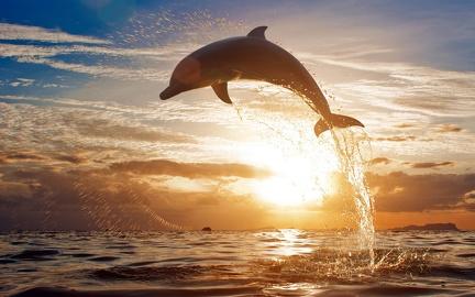 Dolphin HD desktop wallpapers - 2