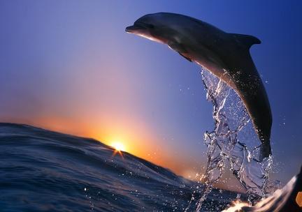 Dolphin HD desktop wallpapers