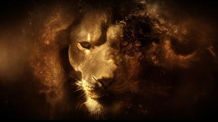 Lion head - Art wallpaper