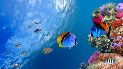 Exotic fish - WQHD