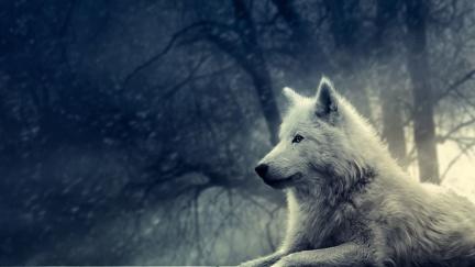 White Wolf - Graphic Creation
