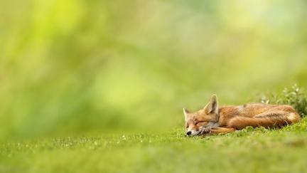 foto de Animaux de la Forêt - Fonds d'écran HD