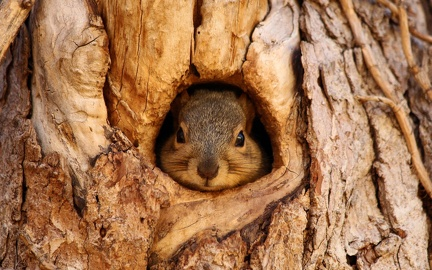 Squirrel in hiding