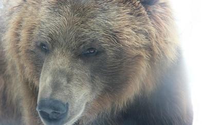 Bear - Photography