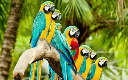 Les Oiseaux Fonds D Ecran Hd