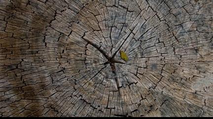 Tree - trunk
