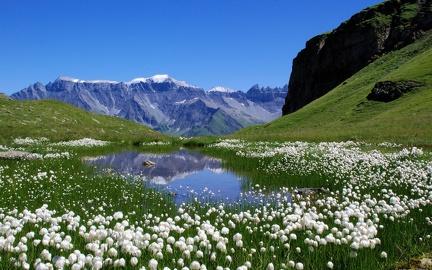 Spring in the Alps (2)