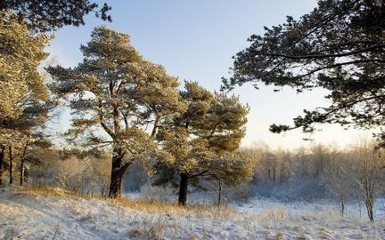 Winter Landscape - wallpaper (18)