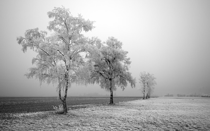 Photography trees in winter