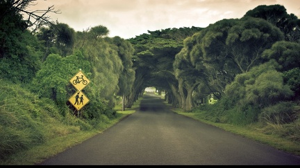 Road - trees - wallpaper