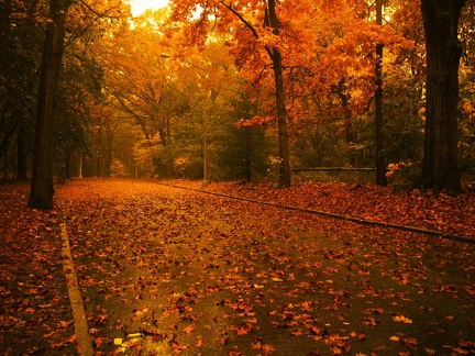 Road in autumn (2)