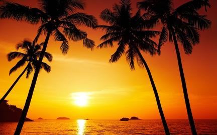 Palm tree - beautiful sunset