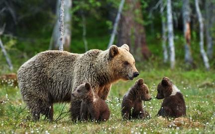 Bear family - wallpaper (2)