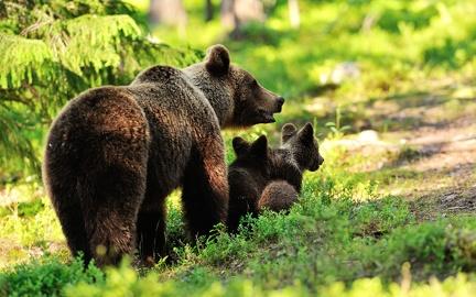 Bear family - wallpaper (4)