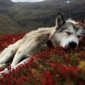 Chien endormi prairie