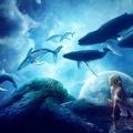 Rêve bleu - baleines - création