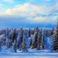 Peinture - Paysage hivernal