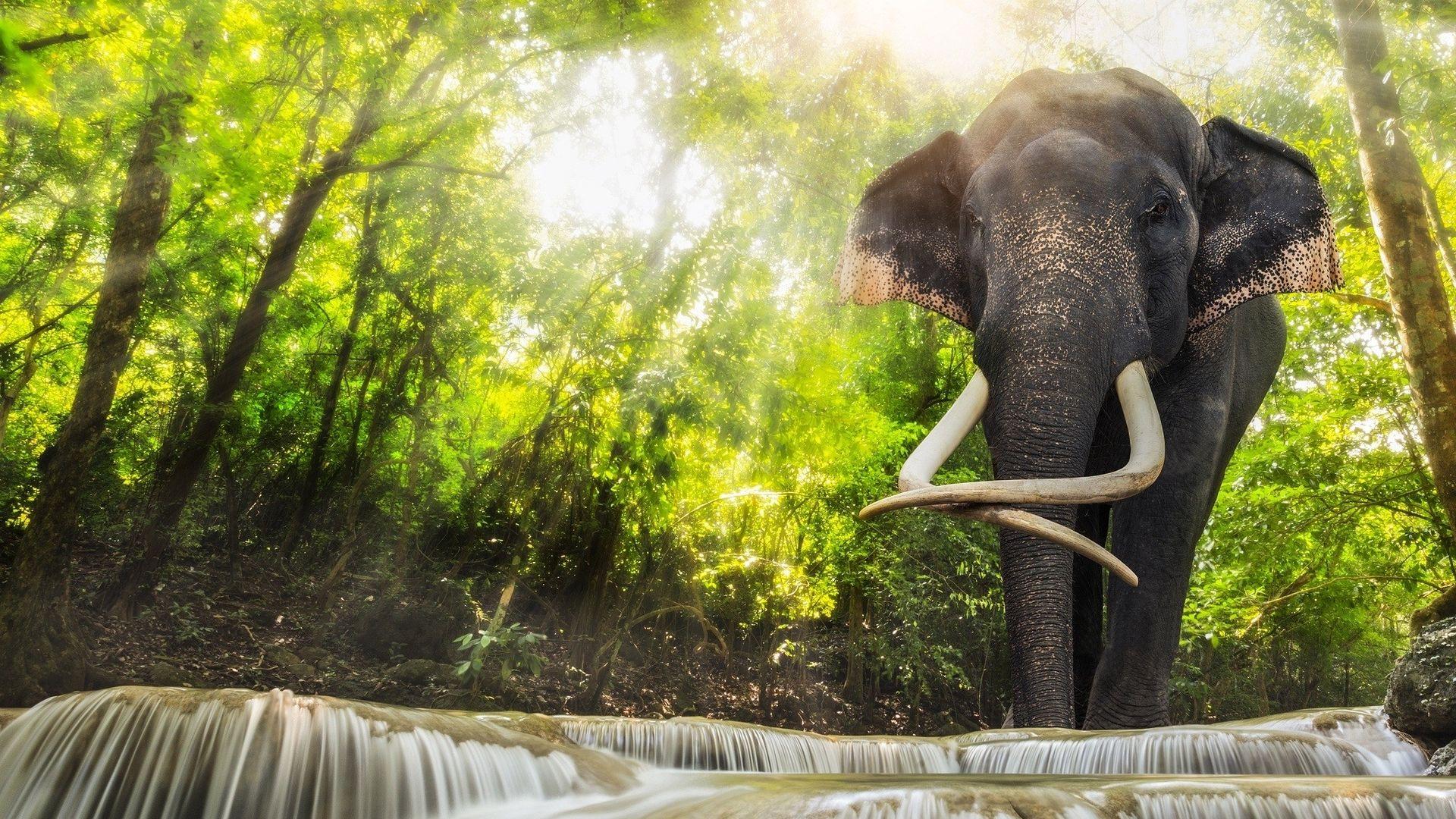 Elephant Indien Fond D Ecran Hd