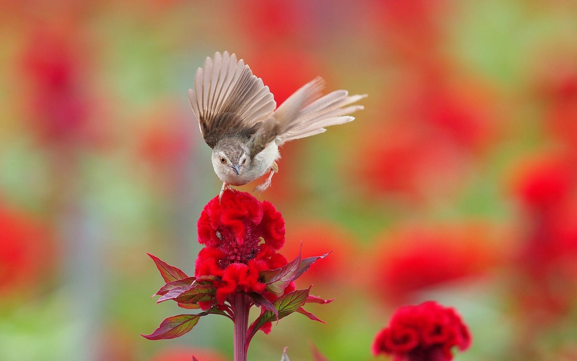 Oiseau Fond D Ecran Fond D Ecran Hd