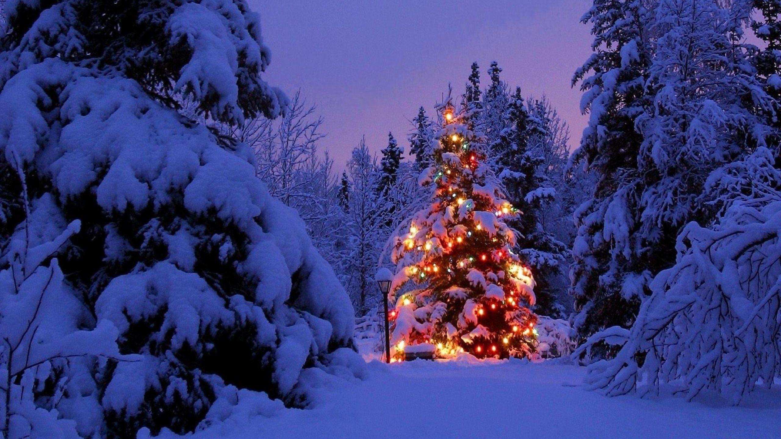 Sapin De Noël Dans La Forêt 2560x1440 Fond Décran Hd