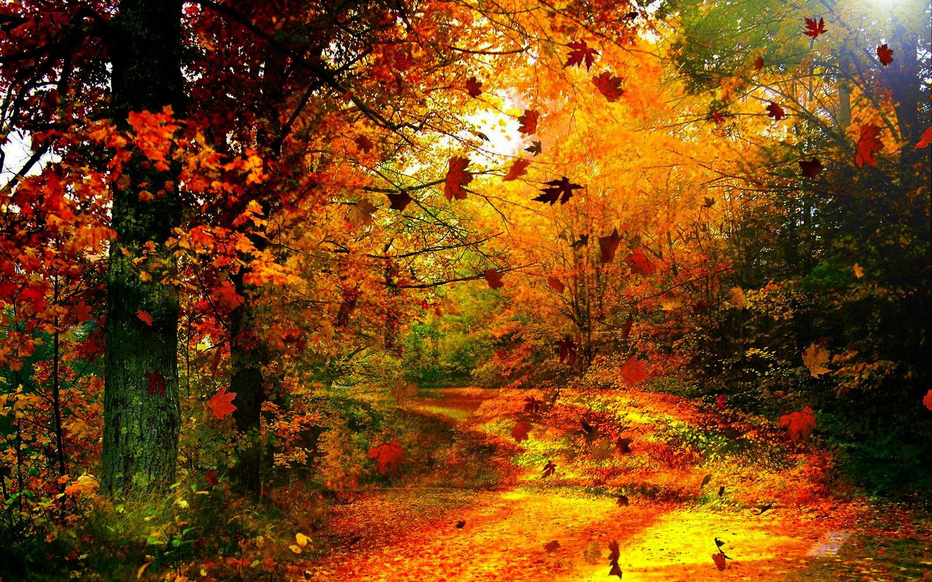 foto de Les couleurs de l'automne - Fond d'écran HD
