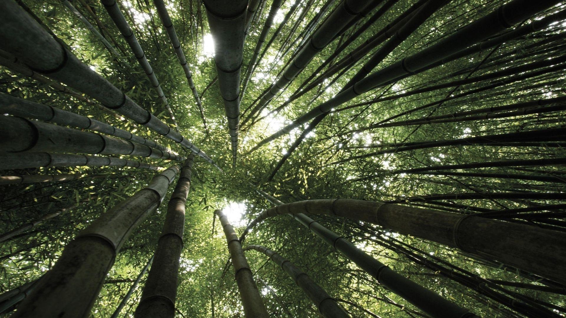 Foret De Bambou Fond D Ecran Hd
